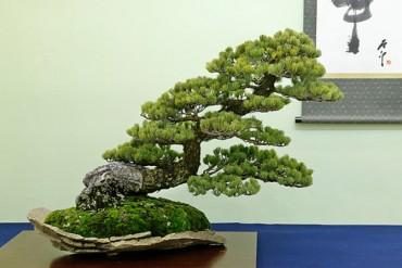 Chiêm ngưỡng những cây Bonsai đẹp