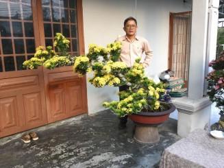 Kinh nghiệm nuôi Trang bonsai