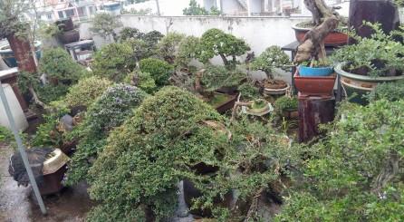 AE miền nam phòng chống bão số 16 (Tembin) cho Bonsai