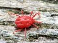 Cách trị nhện đỏ cho cây