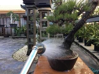 Phòng ngừa nấm bệnh và vệ sinh cho cây trước khi vào mùa ẩm ướt.