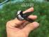 Kềm cạp tròn Nhật Bản 175mm