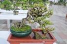 Kỹ thuật làm lão hóa cây cảnh (vỏ cây)