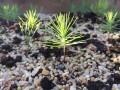 Sản phẩm bonsai test