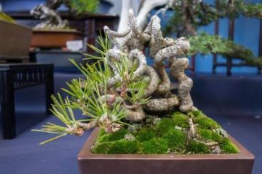 Thuốc diệt nấm thường dùng cho cây cảnh có những loại nào?