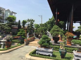 Vườn cây cảnh của Đại Gia ở Sài Gòn